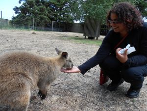 Professor Seth feeds a wallaby
